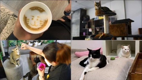 Dubai's first cat cafe, Ailuromania, hopes rescues will find purr-fect new homes(Twitter/fahiiHA/rapplerdotcom)