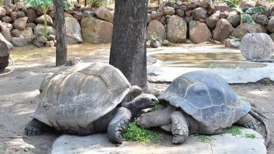 The 121-year-old Galapagos Giant Tortoise at the Nehru Zoological Park.(ANI)