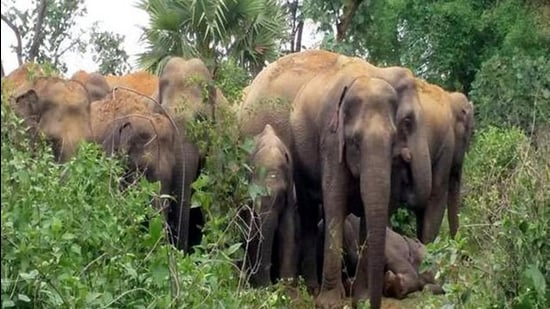 Negative interactions between humans and wildlife intensify when local communities feel that wildlife needs or values are given priority over their own needs (Manoj Kumar/Hindustan Times)