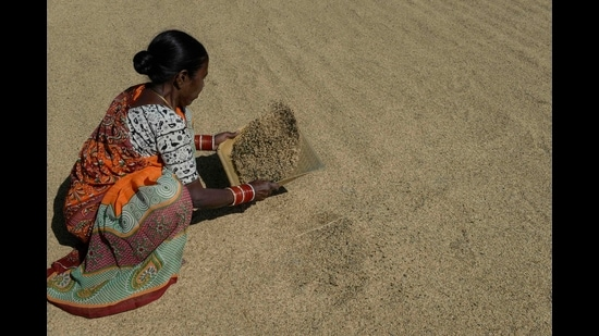 A farmer separates unpolished rice in Thoopran Mandal in Medak District, some 60 km from Hyderabad on November 17, 2020. (File photo)