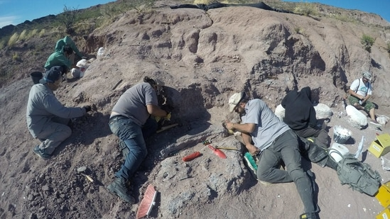 Palaeontologists excavate of dinosaur bones that belonged to a titanosaur in Neuquen province, Argentina February 19, 2017. CTyS-UNLaM/Handout via REUTERS ATTENTION EDITORS - THIS IMAGE WAS PROVIDED BY A THIRD PARTY.(via REUTERS)