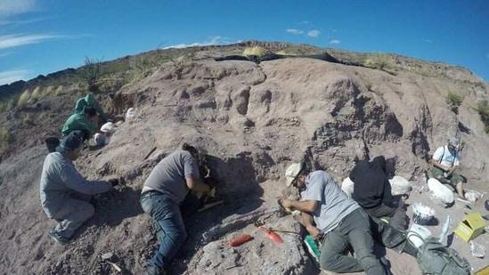 Palaeontologists excavate of dinosaur bones that belonged to a titanosaur in Neuquen province, Argentina.(Reuters)