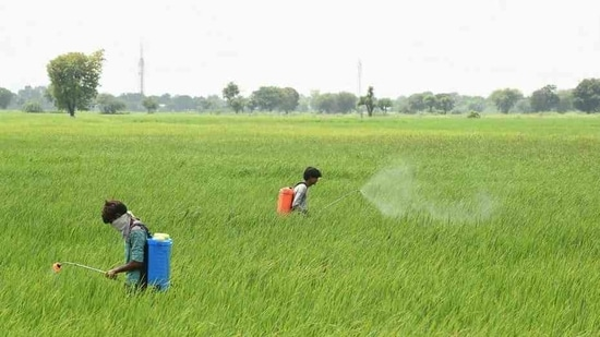 Villagers spray pesticides in a field on the outskirts of Sanand, around 30 km from Ahmedabad on September 1. The five states cited previously have also reported the maximum number of patients that have been cured and discharged, cumulatively accounting for 58.04% of the total 65,081 people who have recovered till September 1. (Sam Panthaky / AFP)