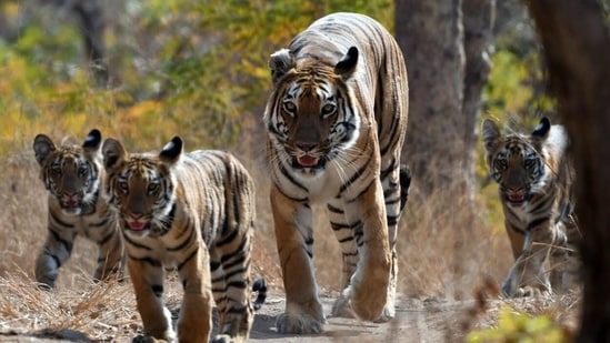On the occasion of World Wildlife Day, various ministers took to Twitter to raise awareness around various issues concerned with wildlife and its conservation.(ANI Photo)