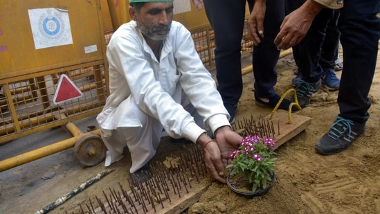 Farmers sow flowers next to iron nails placed by Delhi Police at Ghazipur (Delhi-UP border) during the ongoing protest against the new farm laws, near Ghaziabad(Sakib Ali/HT Photos)