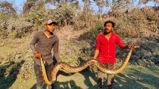The python was rescued by officials of Dabgram forest range.(ANI)