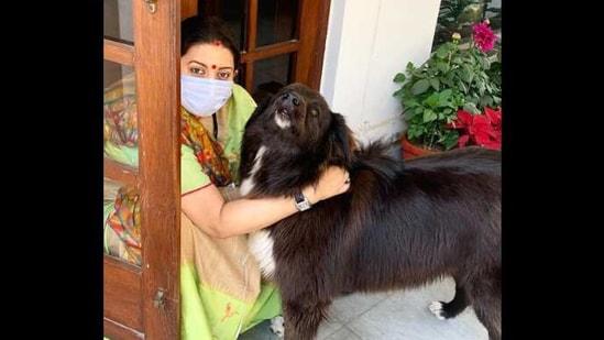 The image shows Smriti Irani with Sheru.(Instagram/@smritiiraniofficial)