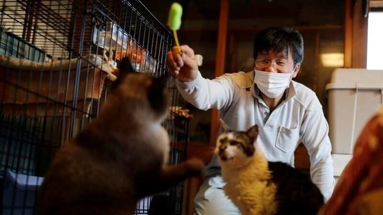 Sakae Kato plays with cats that he rescued, called Mokkun and Charm, who are both infected with feline leukemia virus, at his home, in a restricted zone in Namie, Fukushima Prefecture, Japan.(Reuters)