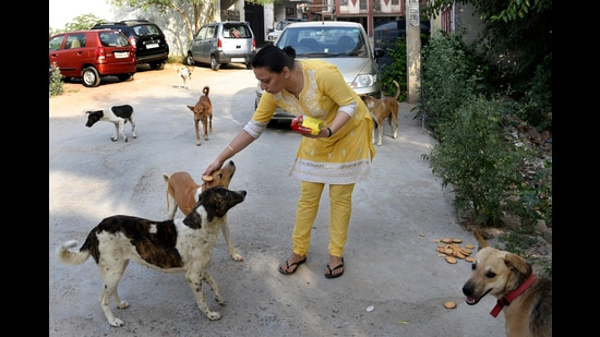 Animal feeders are hailing Delhi HC's directive to an RWA, which entails allocating designate spots to feed strays. (Tribhuwan Sharma/HT (Photo for representational purposes only))