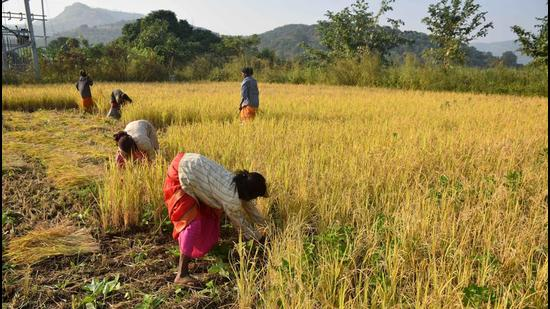 While Maharashtra's economic growth is expected to be -8% (from 5% in 2019-20) this financial year, the agricultural growth assumes significance. (Hindustan Times)