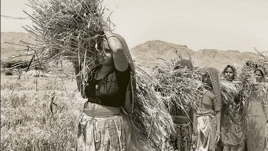 With land in agriculture mostly being in the name of men, women are not recognised as farmers, although a large proportion of them are involved in agricultural work. This also keeps women away from accessing various schemes and resources (HT Photo)