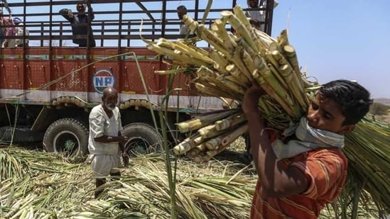 In the 2014 Lok Sabha polls, the Bharatiya Janata Party (BJP) swept the region after promising to clear the sugarcane dues owed to farmers.(Bloomberg file photo)