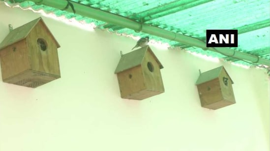 World Sparrow Day: The image shows nest boxes for the birds.(Twitter/@ANINewsUP)