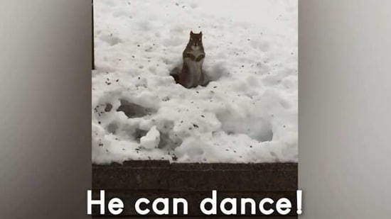 The image shows a squirrel dancing in snow.(Screengrab)