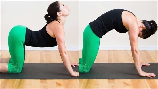 Improve posture and spinal health with Yoga's Cat-Cow stretch or Chakravakasana(Twitter/jokebox_hero)