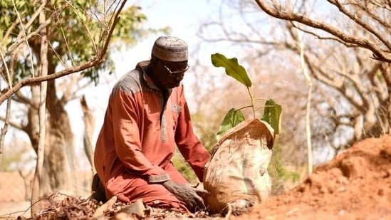 Yacouba Sawadogo, a farmer, who is known as the 'man who stopped the desert' for bringing life back to the arid lands, prepares to plant a tree in Ouahigouya, Burkina Faso.(REUTERS)