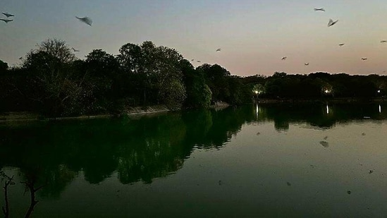 Every day, just after sunset, hundreds of bats start flying over and around the lake in south Delhi's Deer Park.