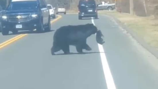 The image shows a mama bear crossing a road with her cub.(Facebook/@winchesterct)