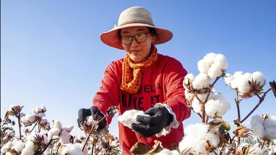 In this file photo, a cotton picker works in the field in Hami in northwest China's Xinjiang region. (AP)