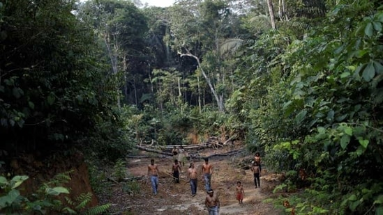A deforested area inside the Amazon rainforest near Humaita, Amazonas State, Brazil.(Reuters File)