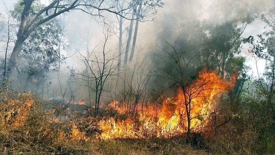 Compared to 172 hectares last year, over 1290 hectares of forest land got affected by forest fires this year.(ANI file photo)