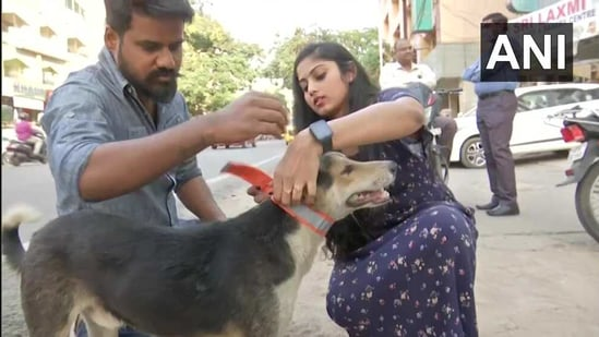 The images shows volunteers of an Hyderabad-based NGO putting fluorescent collars on stray dogs.(Twitter/@ANI)