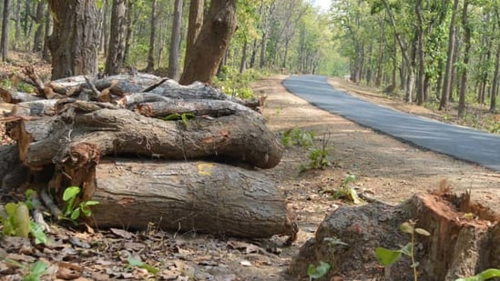 In September 2020, the tree authority had granted permission to Rockfort Estate Developers to cut 11 trees at the site for a proposed commercial building. (Ranjit Patnaik/HT PHOTO)