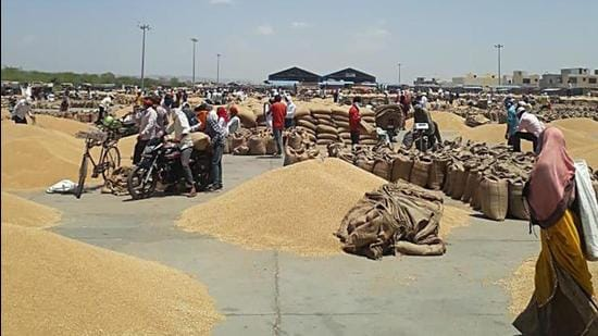 The protesting farmers unloaded wheat outside the office of the Mandi secretary in Karnal. File photo-ht/Representative use