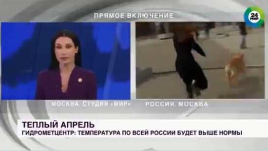 The reporter started running behind the dog after it stole her microphone during live broadcast.(Screengrab)
