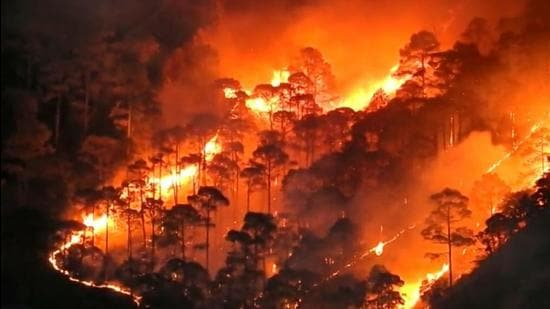 From 2000 to April 5 this year, the hill state has lost 49,231 hectares of forest land to forest fires. (HT Photo)