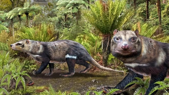 An artist impression of a new species of mammal, baptized with the name Orretherium tzen.(via REUTERS)