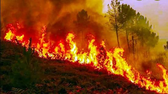 Forest fires are not unusual in Uttarakhand, or, for that matter, in any jungle. (PTI)