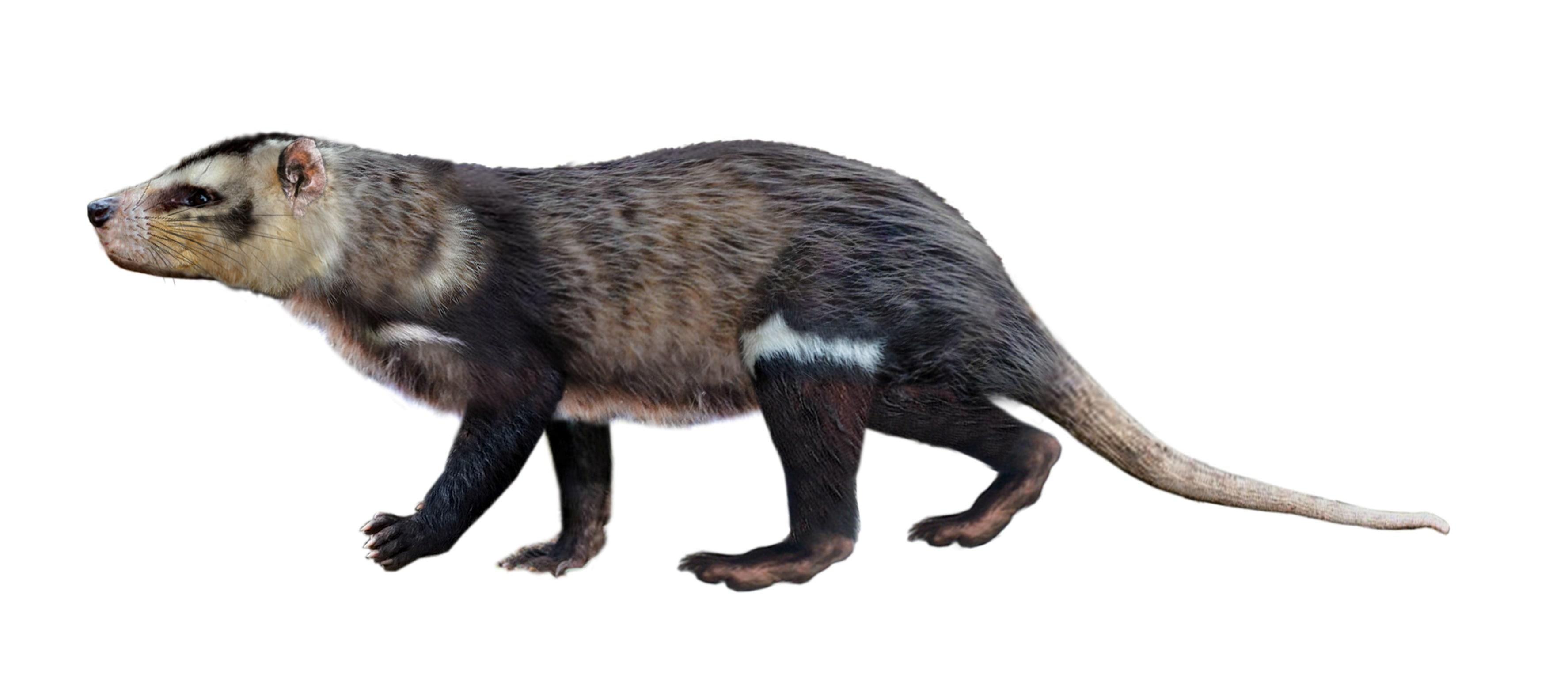 La idea de un nuevo tipo de artista de mamíferos se llamó Arterium Tsen.  (A través de REUTERS)