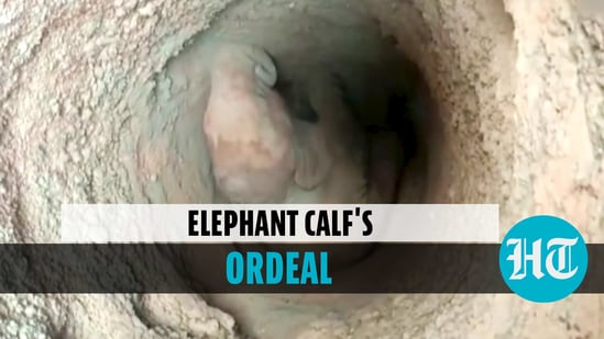 Elephant calf falls into well, rescued using rope contraption in Odisha