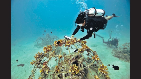 A ReefWatch India diver measures coral growth at one of the NGO's undersea structures. (Reefwatch India)
