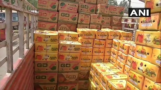 The image shows boxes filled with mangoes.(Twitter/@ANI)