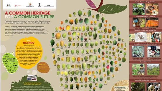 The various mango varieties explained on a poster. (HT PHOTO)