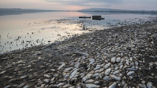Swarms of flies spread near the reservoir and thousands of fish were decomposing in already dirty waters.(AP)