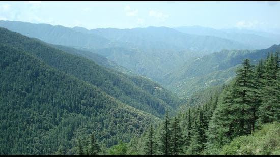 A view of a forest in Shimla. (HT archive)