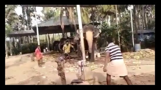 The image shows the elephant playing cricket.(Twitter/@Gannuprem)