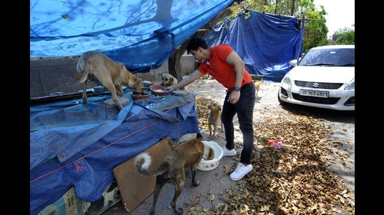 Apart from the localities close to hospital, strays near eateries, offices and shopping complexes are affected as well (Photo: Sunil Ghosh/HT)