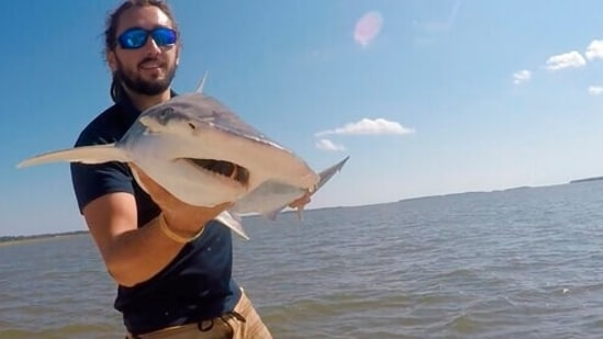 In this Sept. 2015 photo taken by Colby Griffiths on the North Edisto River in South Carolina, scientist Bryan Keller holds a bonnethead shark. Keller is among a group of scientists that found sharks use the Earth's magnetic field as a sort of natural GPS when they navigate journeys that take them thousands of miles across the world's oceans. (AP)