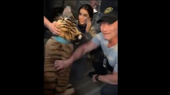 The image shows the rescued Bengal tiger India.(Twitter/@houstonpolice)