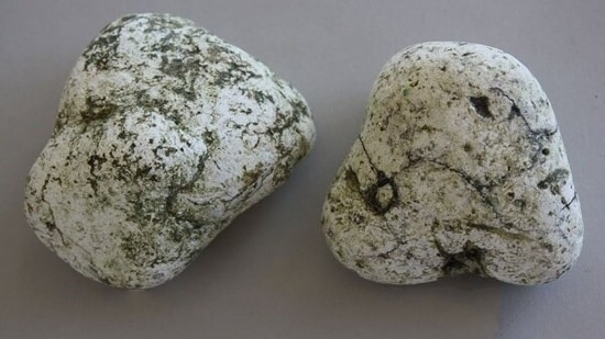 The accused were booked under provisions of the Wildlife (Protection) Act after the forensic team said that prima facie, the product found in their possession was ambergris. (ambergris.co.nz)