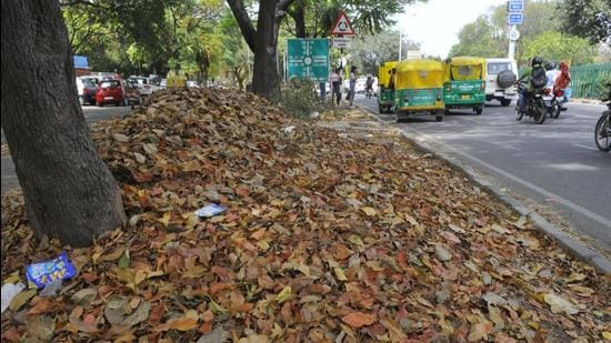 Dry leaves lying on a road in Chandigarh. (HT FILE)