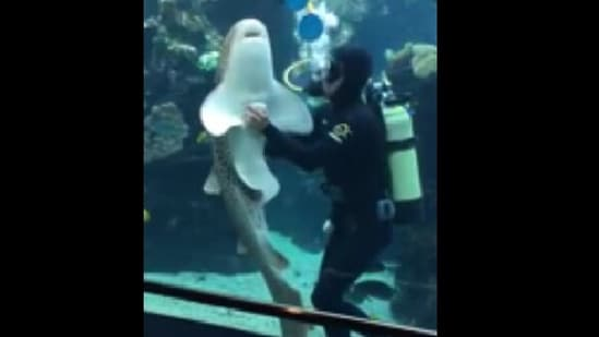 The image shows a shark getting belly rubs from a human.(Reddit.)