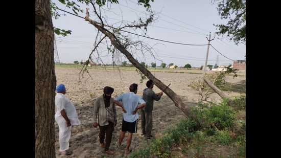 Workers cutting a branch of a tree that fell on an electricity line in Patiala district on Sunday.