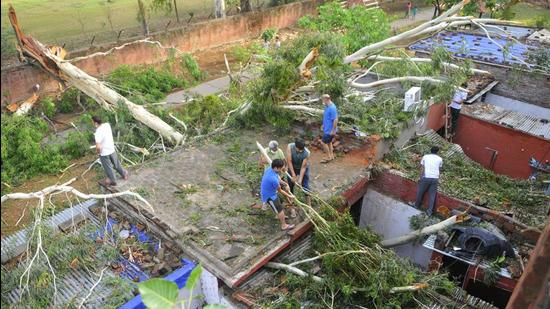 Residents removing branches after an uprooted tree fell on their government houses in Sector 20 during the high-speed winds in Chandigarh on Saturday night. (Keshav Singh/HT)