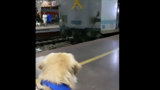 The image shows Oscar looking at a train for the first time.(Instagram/@oscar_wonderpup)