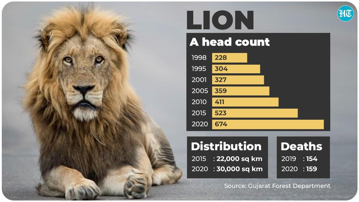 India's lion population (Gujarat forest department)